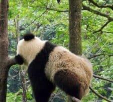 google-panda-62-225x300.jpg